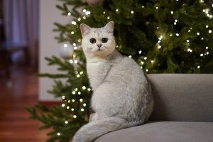 The Holidays and the Potential Pet Hazards - Cat